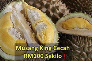 durian musang king murah mahal